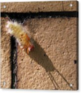 Caterpillar With Shadow Acrylic Print