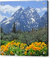 Dm9328-cathedral Group Tetons  Acrylic Print