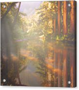 Cathedral Redwoods Acrylic Print