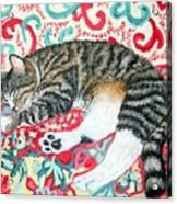 Catnap Time Acrylic Print