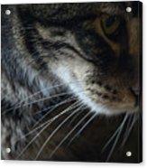Cats Eye Acrylic Print