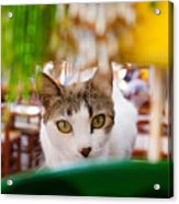 Cat's Eye On Me Acrylic Print