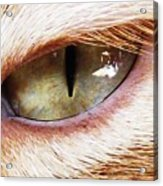 'cats Eye' Acrylic Print