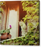 Cats Eye View Acrylic Print