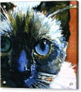 Cats Eyes 13 Acrylic Print