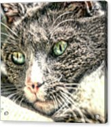 Cats Eyes Acrylic Print
