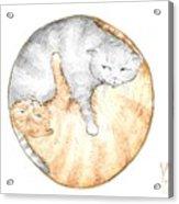 Cat's Harmony Acrylic Print