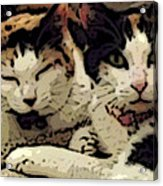 Cats In Bed Acrylic Print by KR Moehr