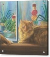 Cats in the Window Acrylic Print