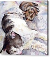 Cats In Watercolor Acrylic Print
