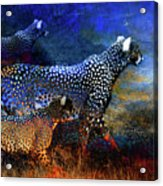 Cats On The Prowl Acrylic Print