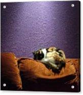 Cats Sleep In Odd Places Acrylic Print
