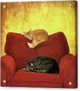 Cats Sleeping On Sofa Acrylic Print by Nancy J. Koch, Pittsburgh, PA