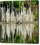 Cattail Reflection Acrylic Print