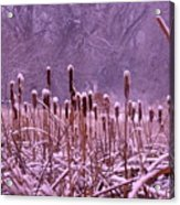 Cattails Ala Mode Acrylic Print by Cynthia  Cox Cottam