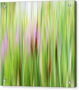 Cattails And Flowers Acrylic Print