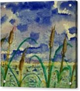 Cattails And Moonlight Acrylic Print