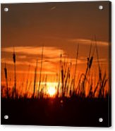 Cattails And Twilight Acrylic Print