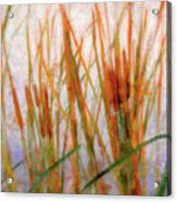 Cattails By The Lake Acrylic Print