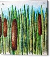 Cattails 1 Acrylic Print