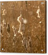 Cattails In Snowstorm 3 Acrylic Print