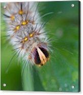 Catterpillar In Close Up 2 Acrylic Print