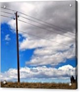 Cattle Chaser Acrylic Print