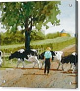 Cattle Crossing Acrylic Print