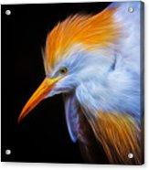 Cattle Egret Electrified Acrylic Print