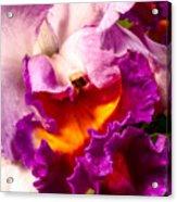 Cattleya IIi Acrylic Print