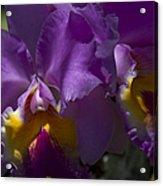 Cattleya Orchid Garden Of Eden Maui Acrylic Print