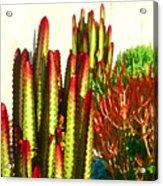 Catus Garden Acrylic Print