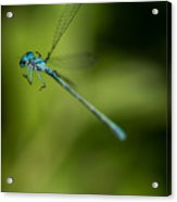 Caught In A Web Acrylic Print