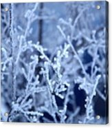 Caught In The Ice Acrylic Print