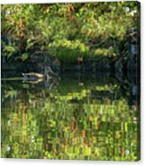 Caught In The Reflection Acrylic Print