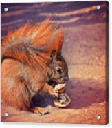 Caught Red Handed Acrylic Print