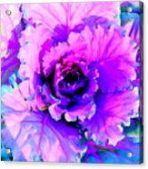 Cauliflower Abstract #8 Acrylic Print
