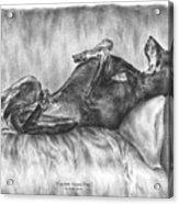 Caution Guard Dog - Doberman Pinscher Art Print Acrylic Print by Kelli Swan