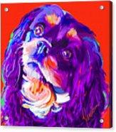 Cavalier King Charles Spaniel 2 Acrylic Print