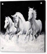 Cavalli Verticali Acrylic Print