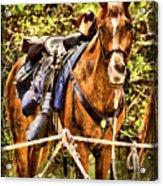 Cavalry Horse Circa 1864 Acrylic Print