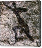 Cave Art, Algeria Acrylic Print