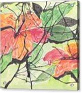 Cayenas Atrapadas  Hibiscus Acrylic Print