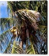 Cayman Palm Acrylic Print