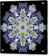 Ceanothus Iris Medley 1 Acrylic Print