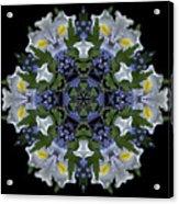 Ceanothus Iris Medley 2 Acrylic Print