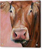Cecilia The Cow Acrylic Print