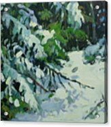 Cedar And Snow Acrylic Print