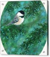 Cedar Chickadees - Bird 1 Acrylic Print