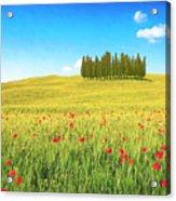 Cedar Grove And Poppies Acrylic Print